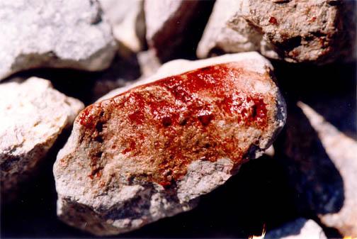 Blodklippor